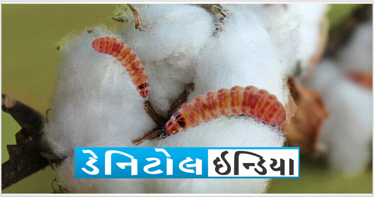Sumitomo Danitol Website Banner for Mobile guj