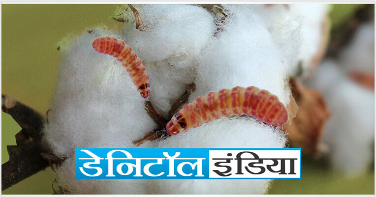 Sumitomo Danitol Website Banner for Mobile marathi